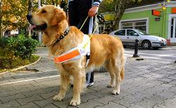 #Lexique : L'aide Animalière